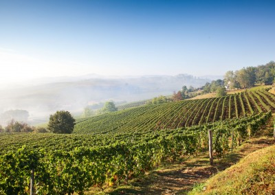Romantic vineyards in the Piedmont region