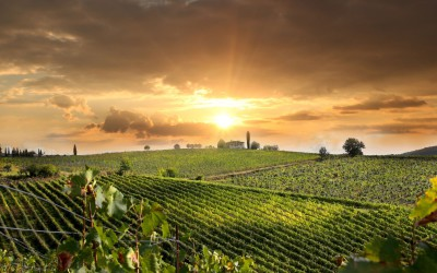 Getting married in the wine region of Valpolicella